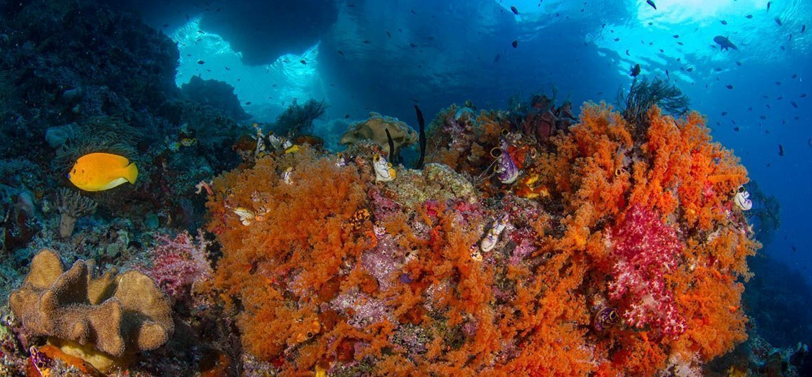 Orange soft coral in front of swim through in reef