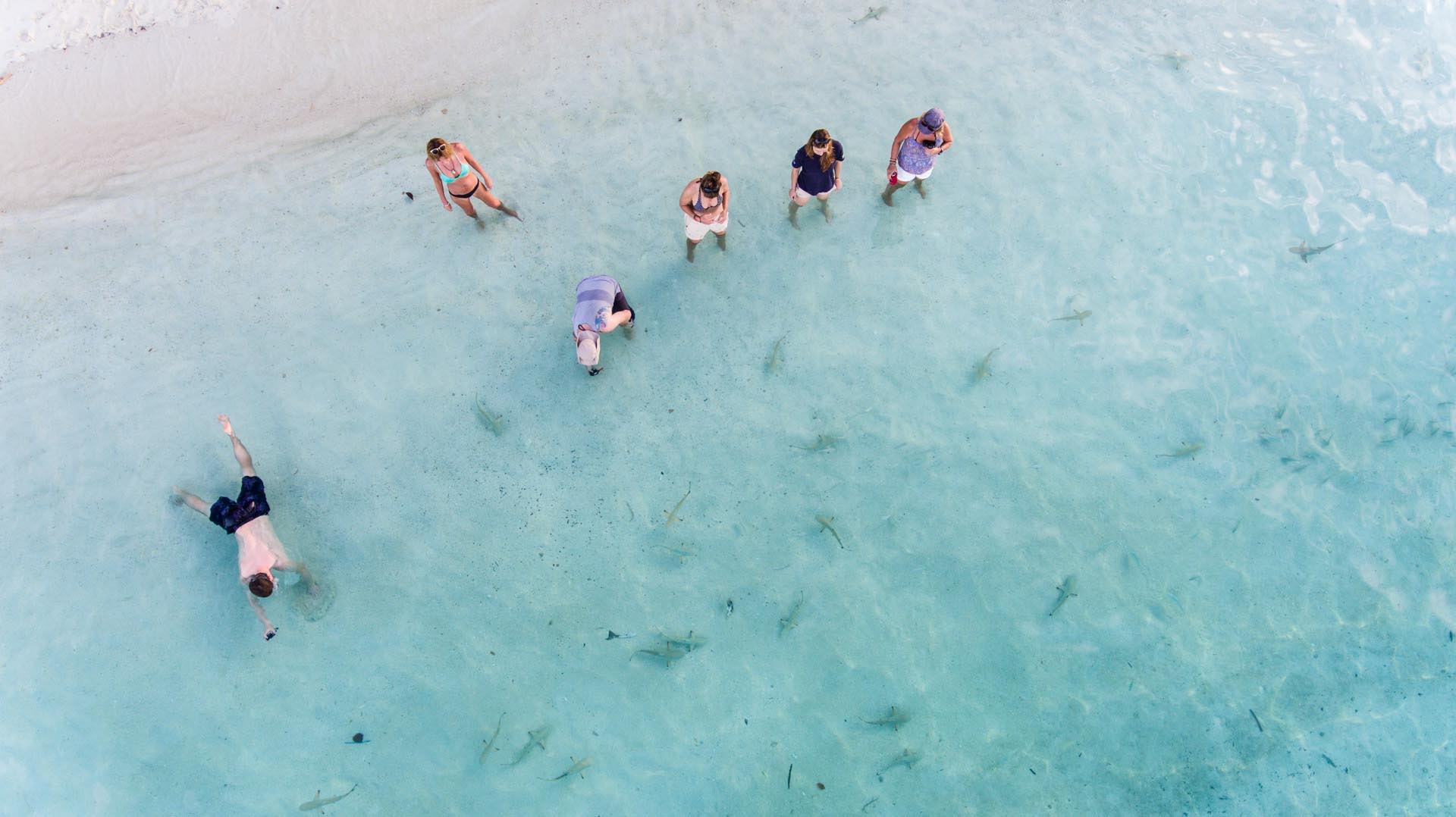 guests standing in shallow water with many baby sharks around their feet