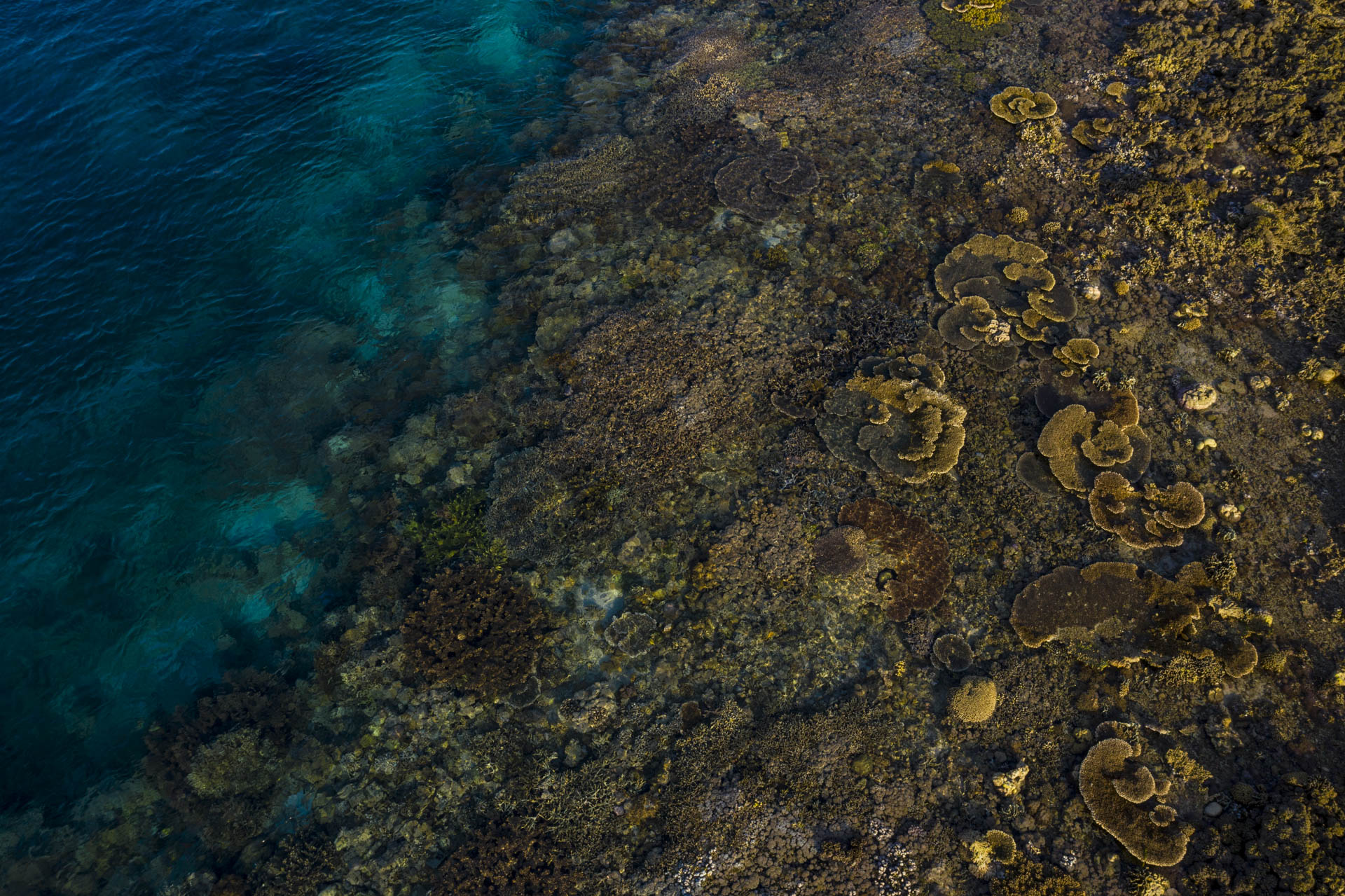 Aerial view of exposed coral reef