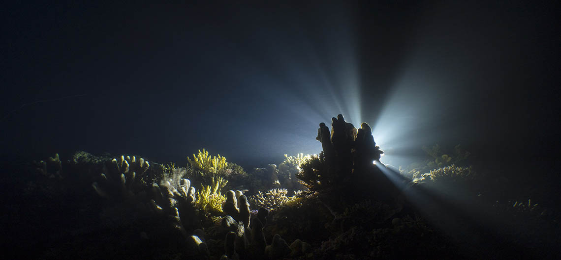 Night time reef scene
