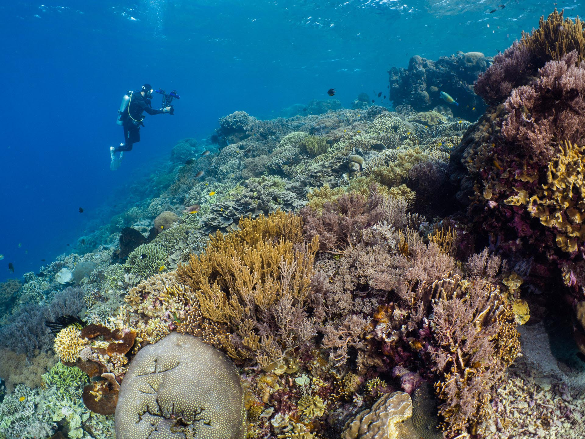 scubadiver filming coral reef