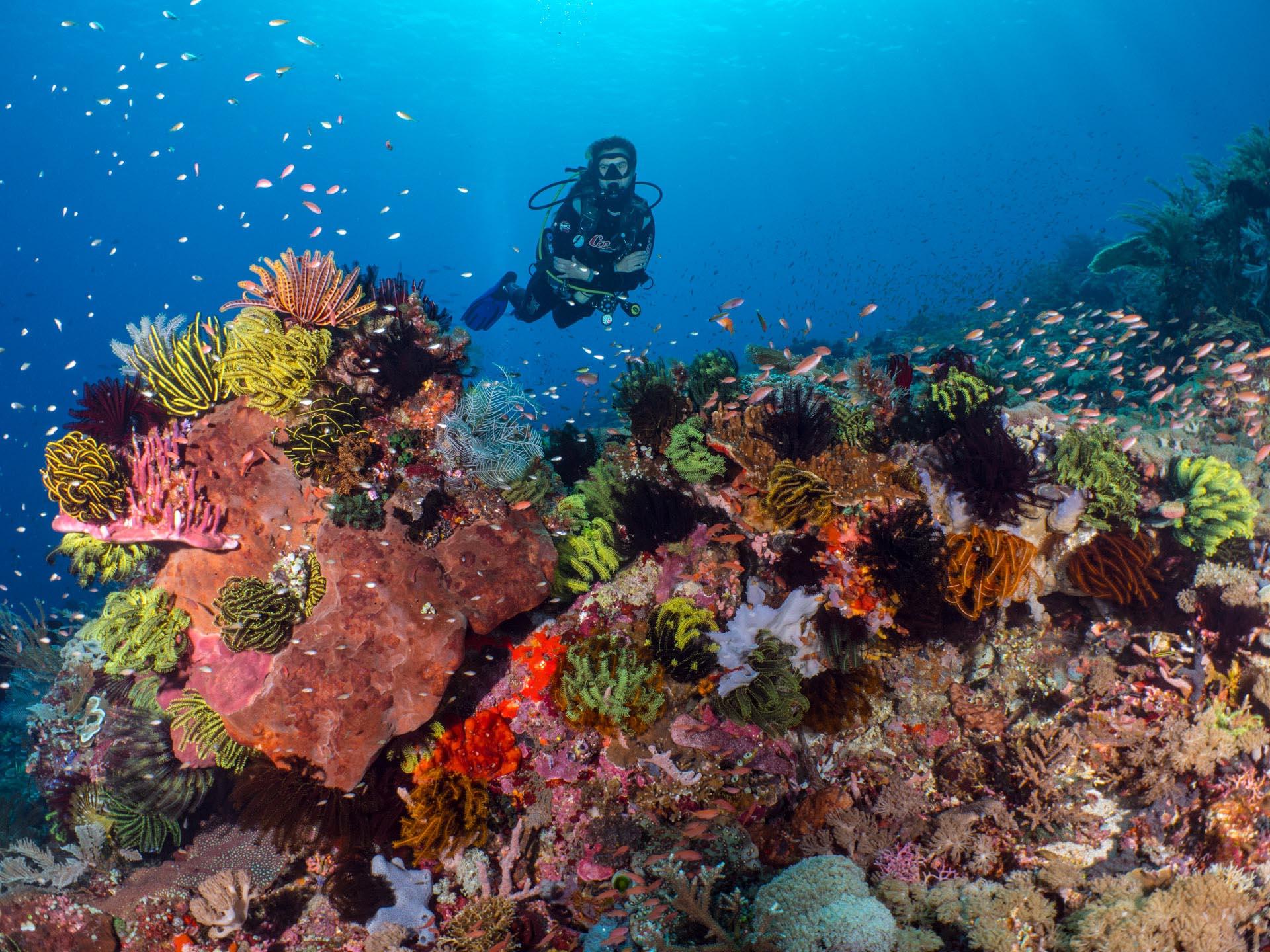 diver behind coral reef