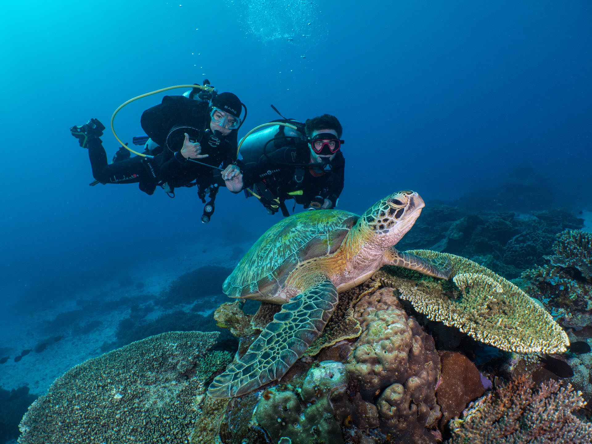 two divers behind sleeping sea turtle