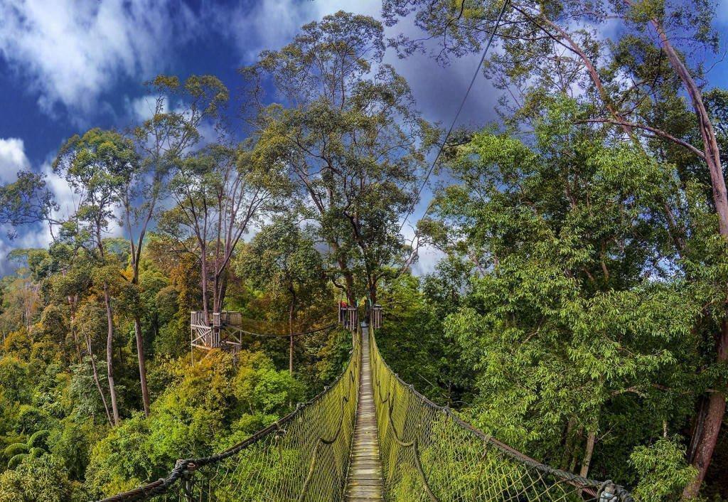 Canopy walk in Borneo