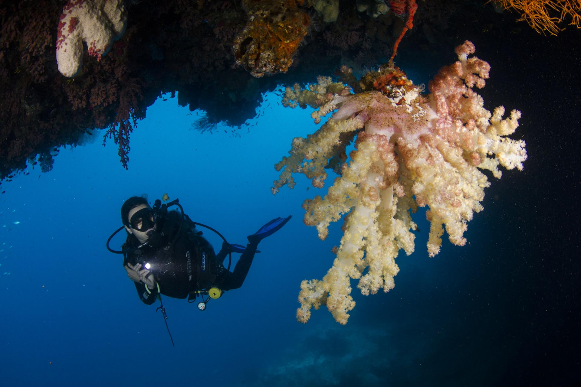 diver in underwater cave looking at coral