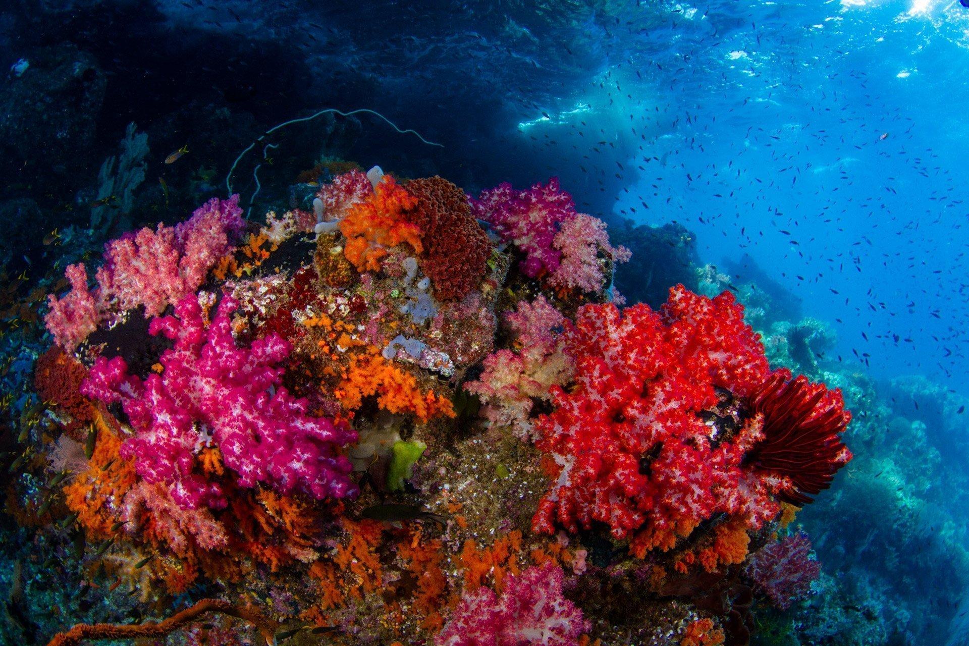 colorful soft coral in raja ampat
