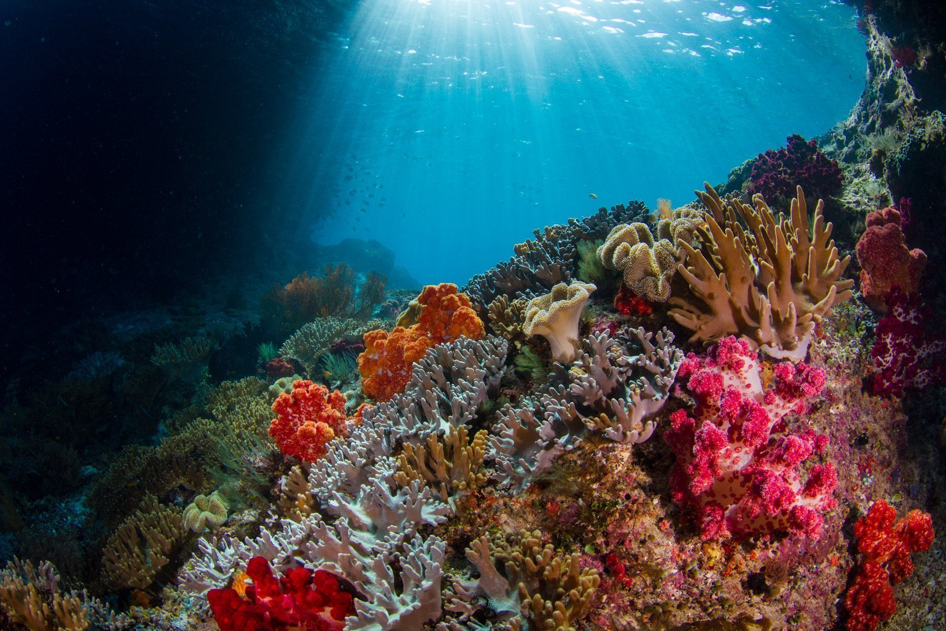 beautiful coral scene with light shinning down