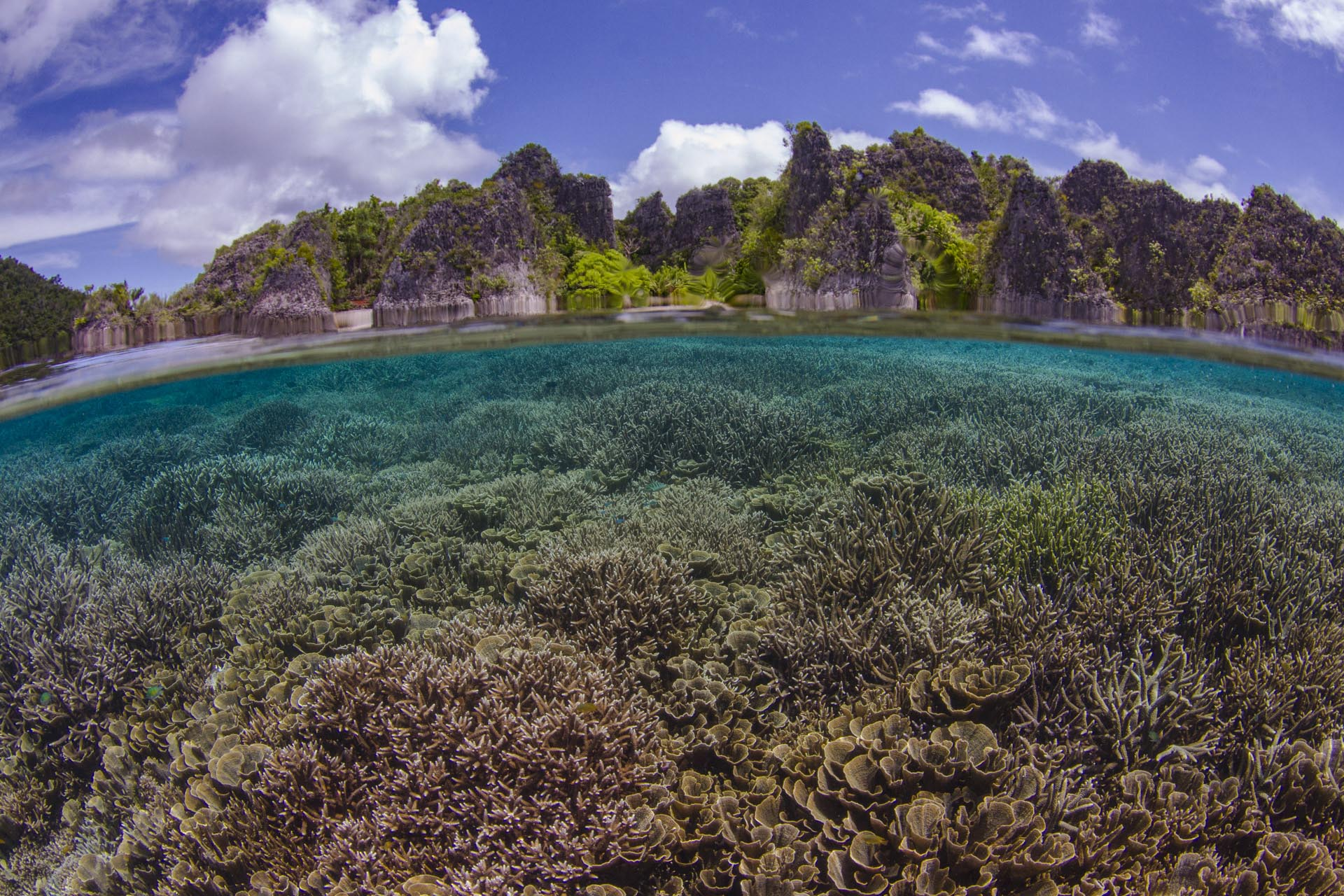 over under perspective of coral reef with islands above