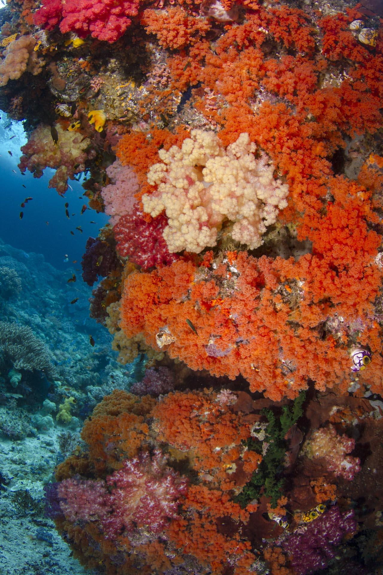 multi colored soft coral wall