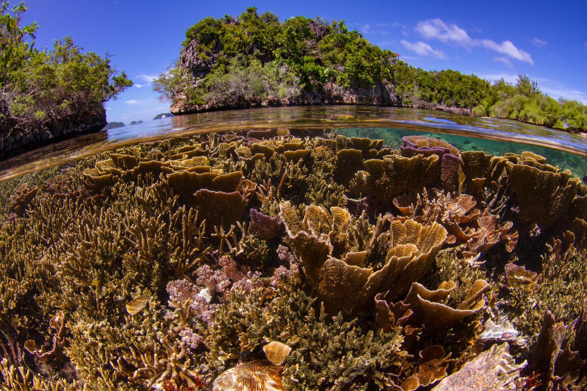 split shot of hard coral reef and raja ampat islands