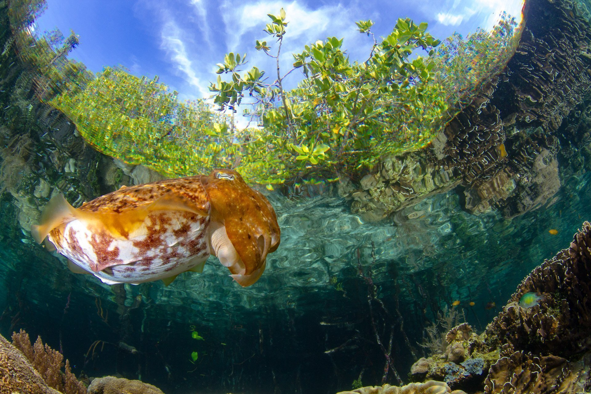 cuttle fish with mangroves and blue sky above