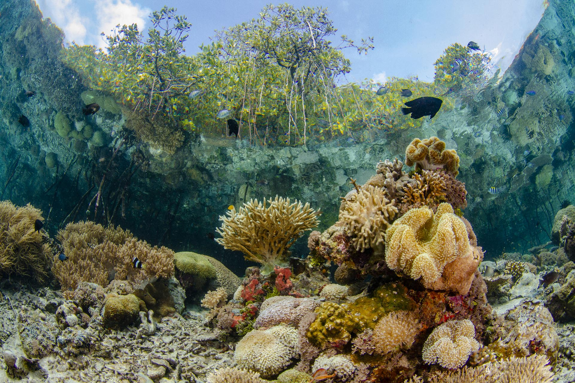 view from beneath mangroves with coral reef