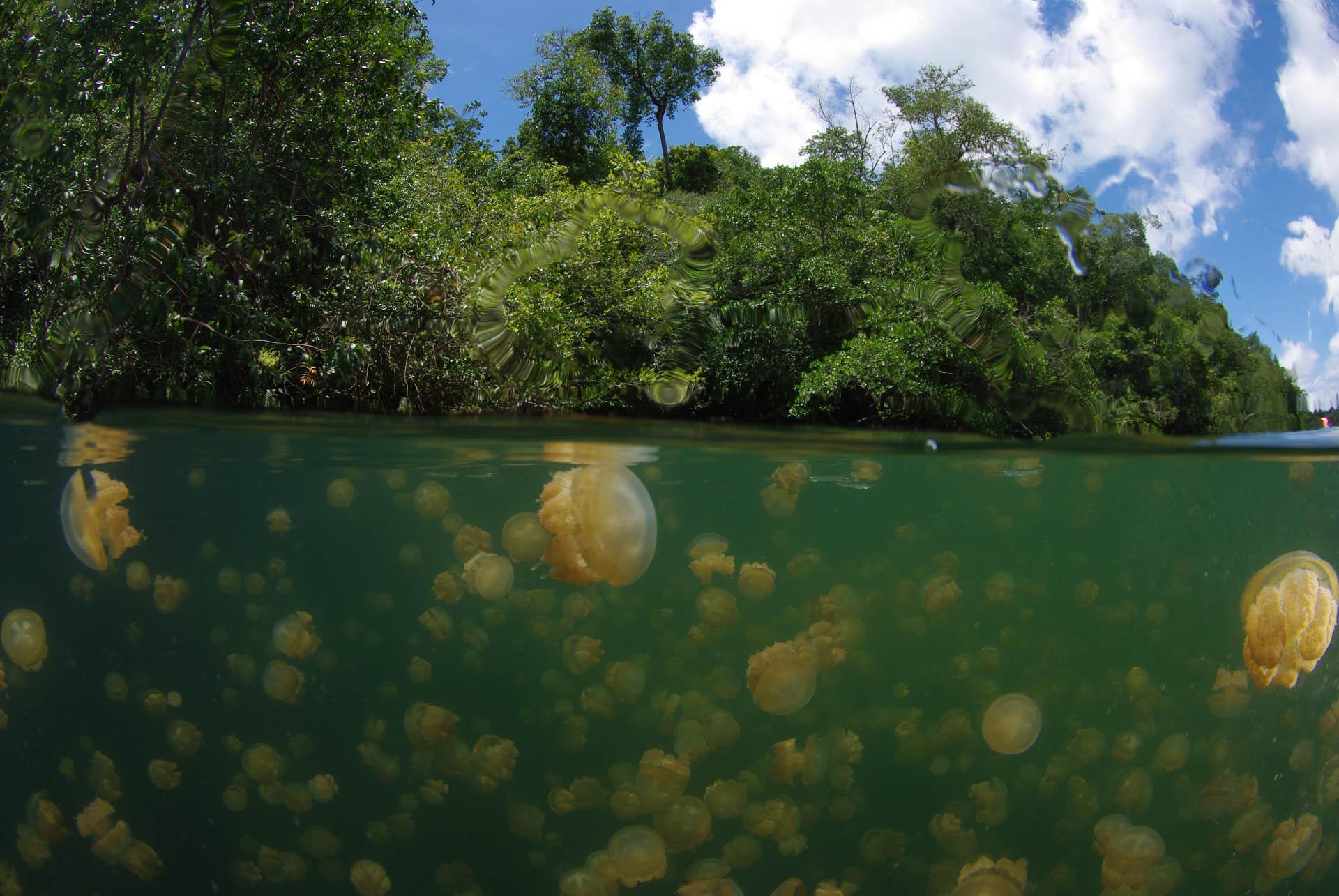 Jellyfish lake in Borneo