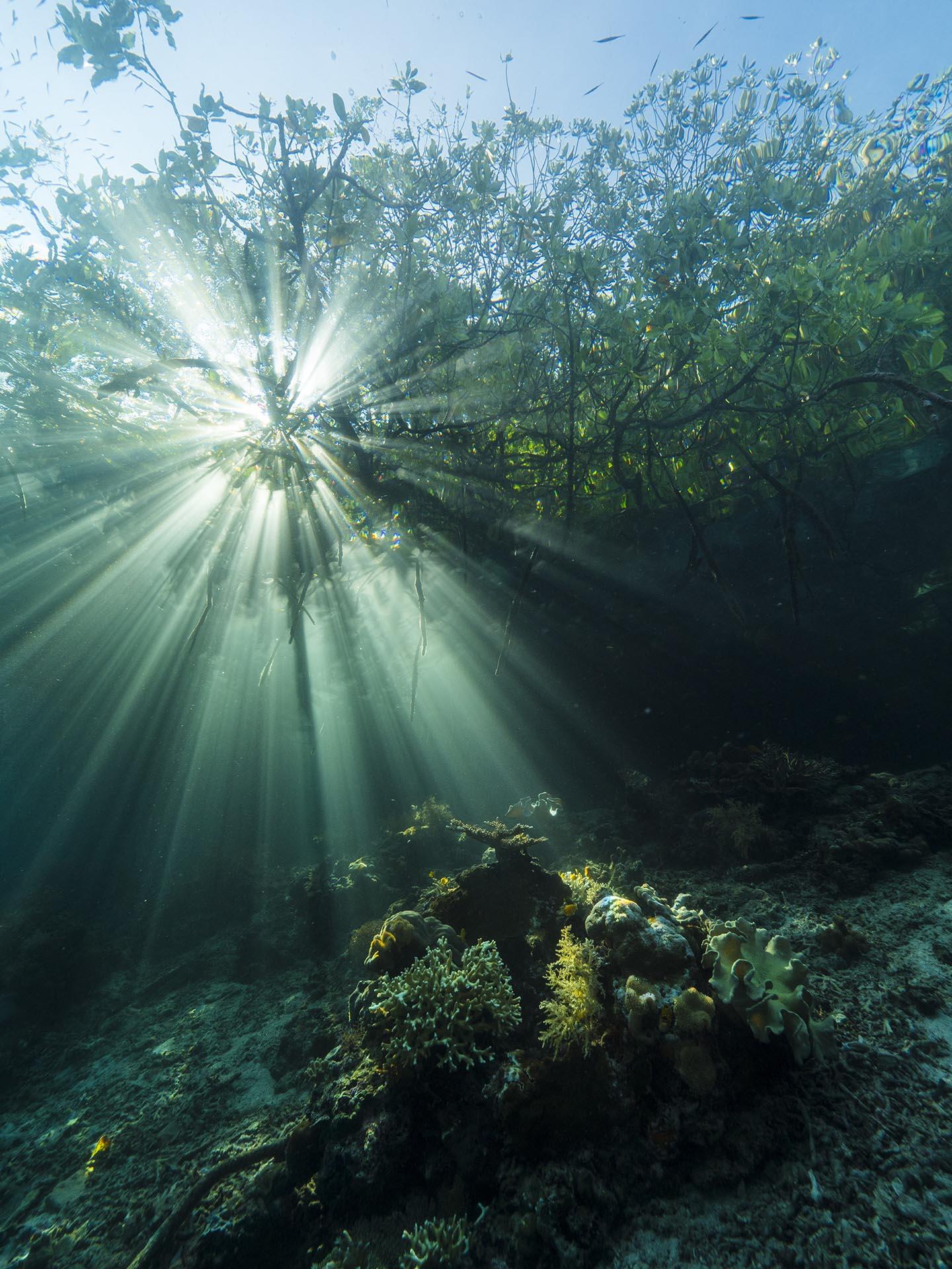 sun rays coming through mangroves