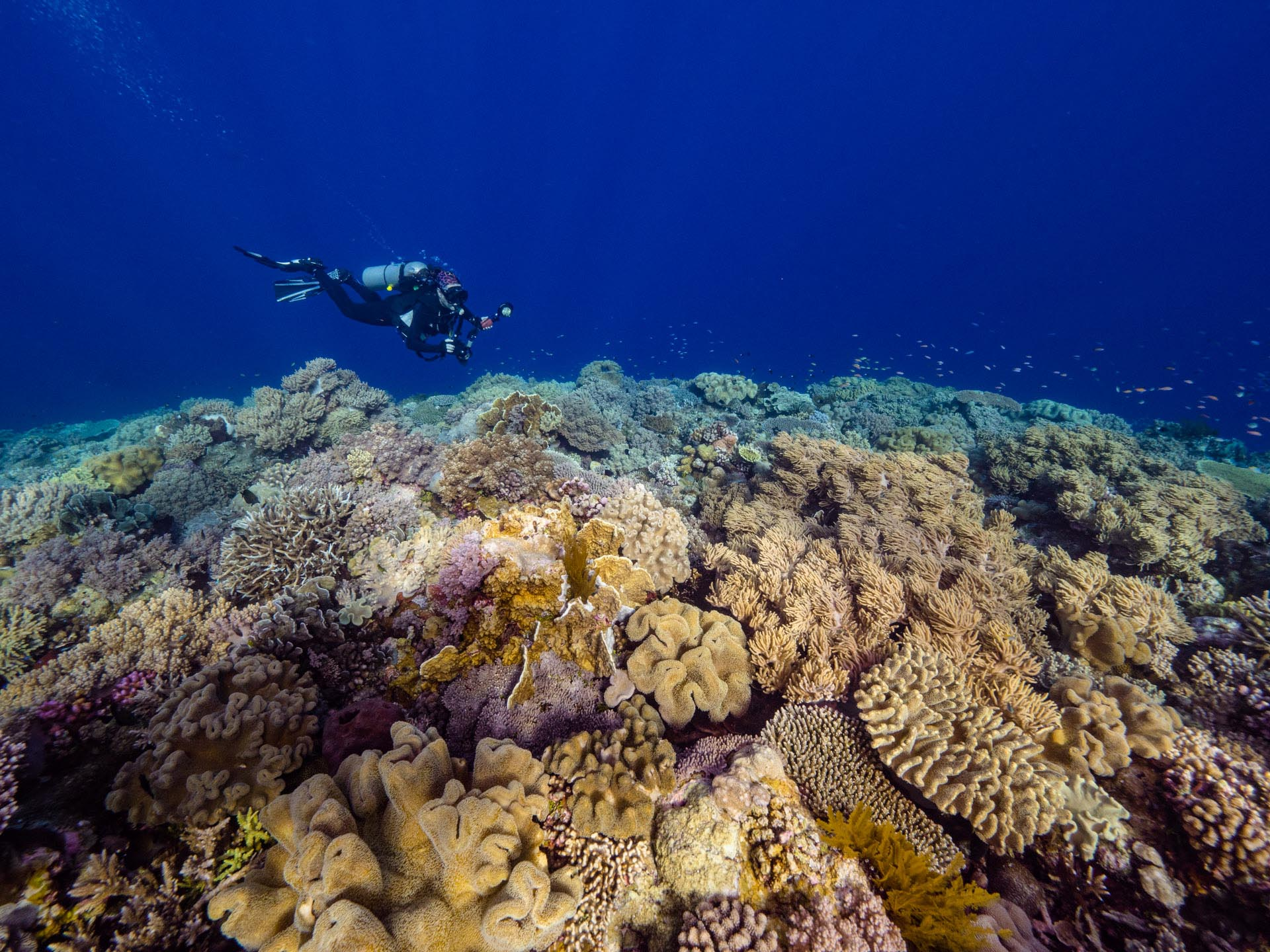 diver with coral reef
