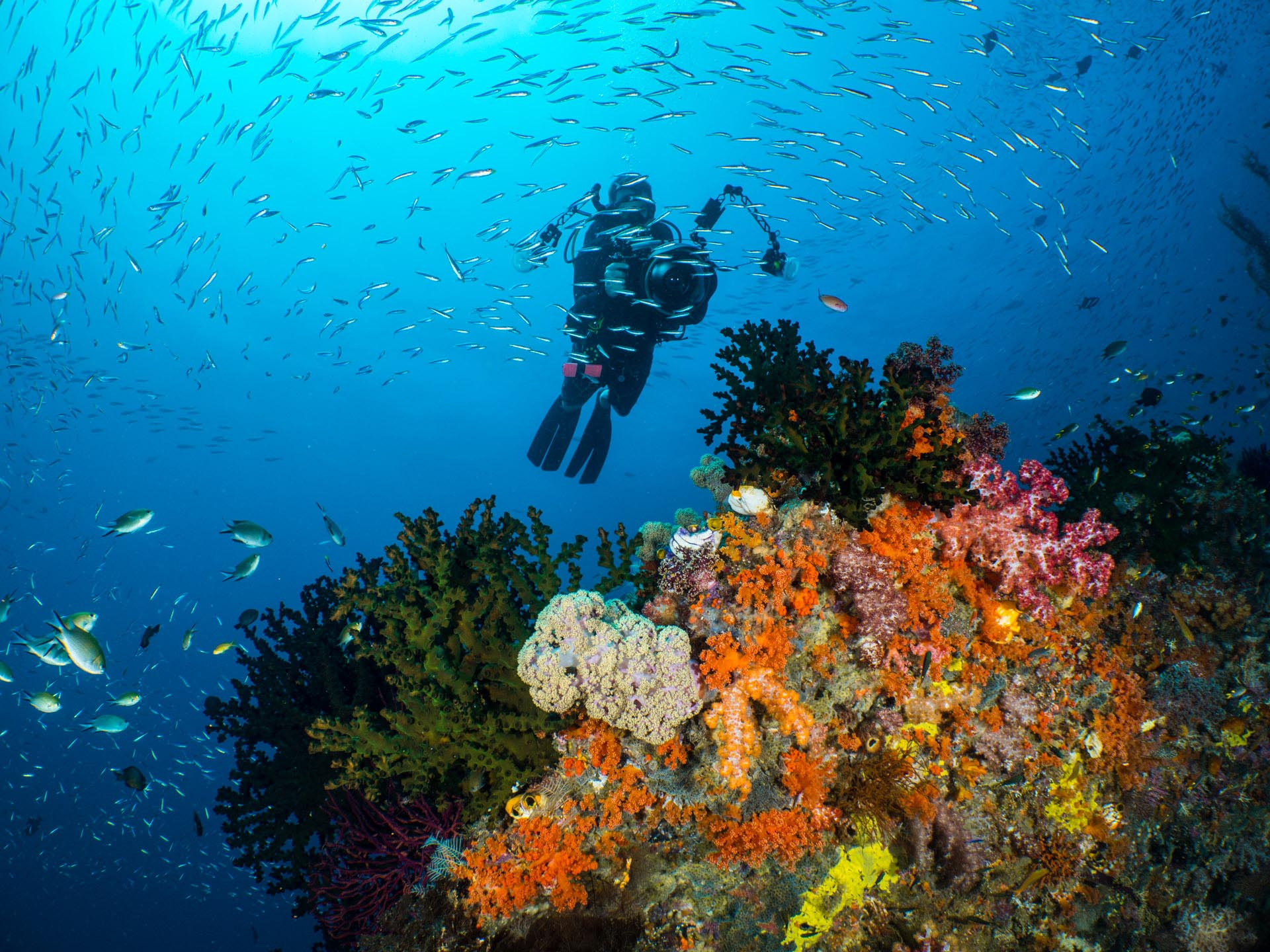 underwater photographer over soft coral and fish