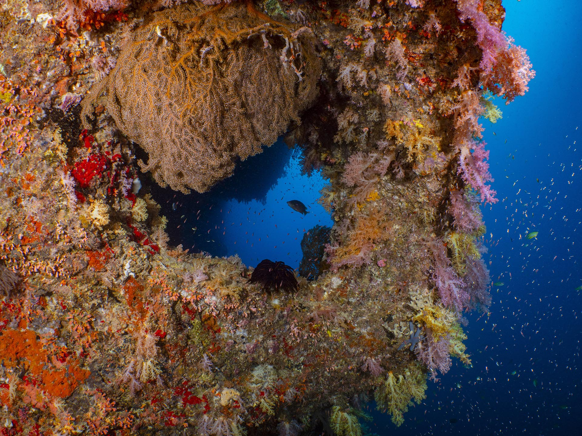 soft coral covering underwater arch