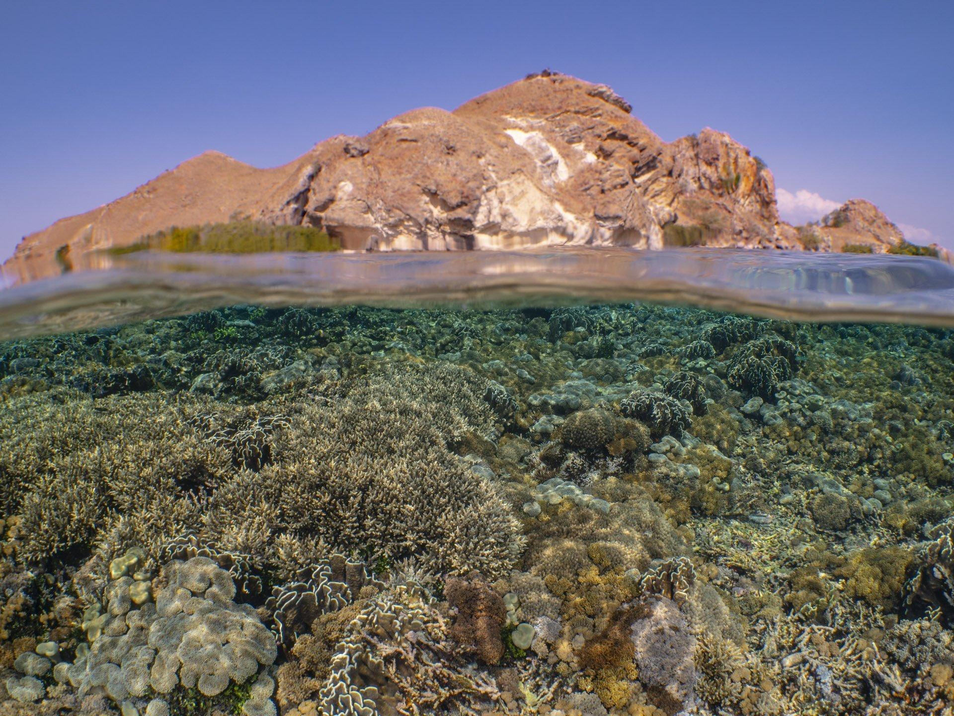 Split shot of Komodo reef and Komodo island