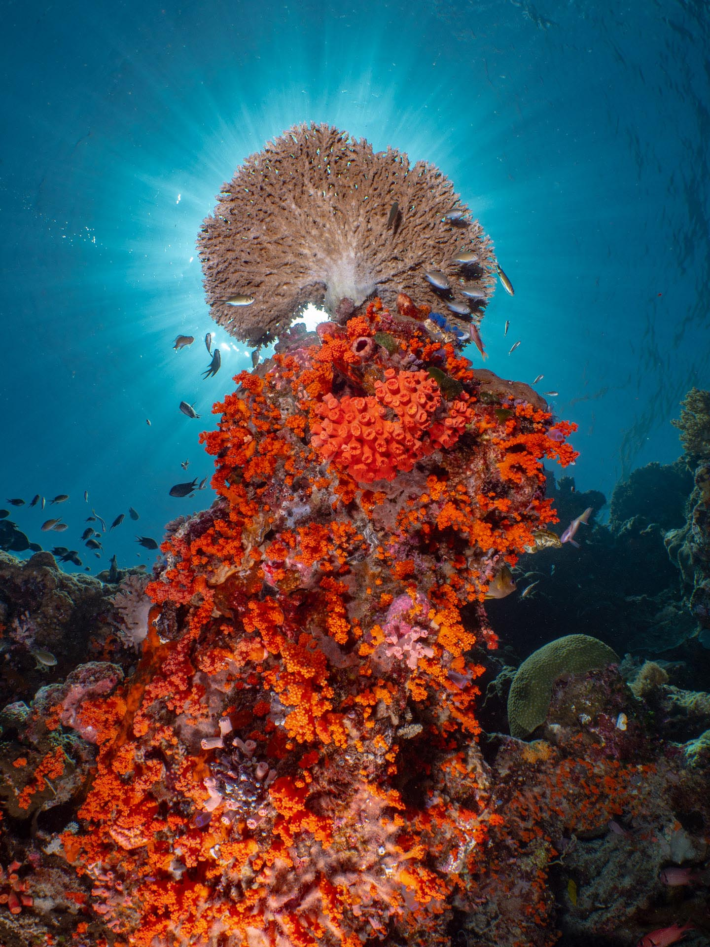 Coral reef with sun burst behind coral