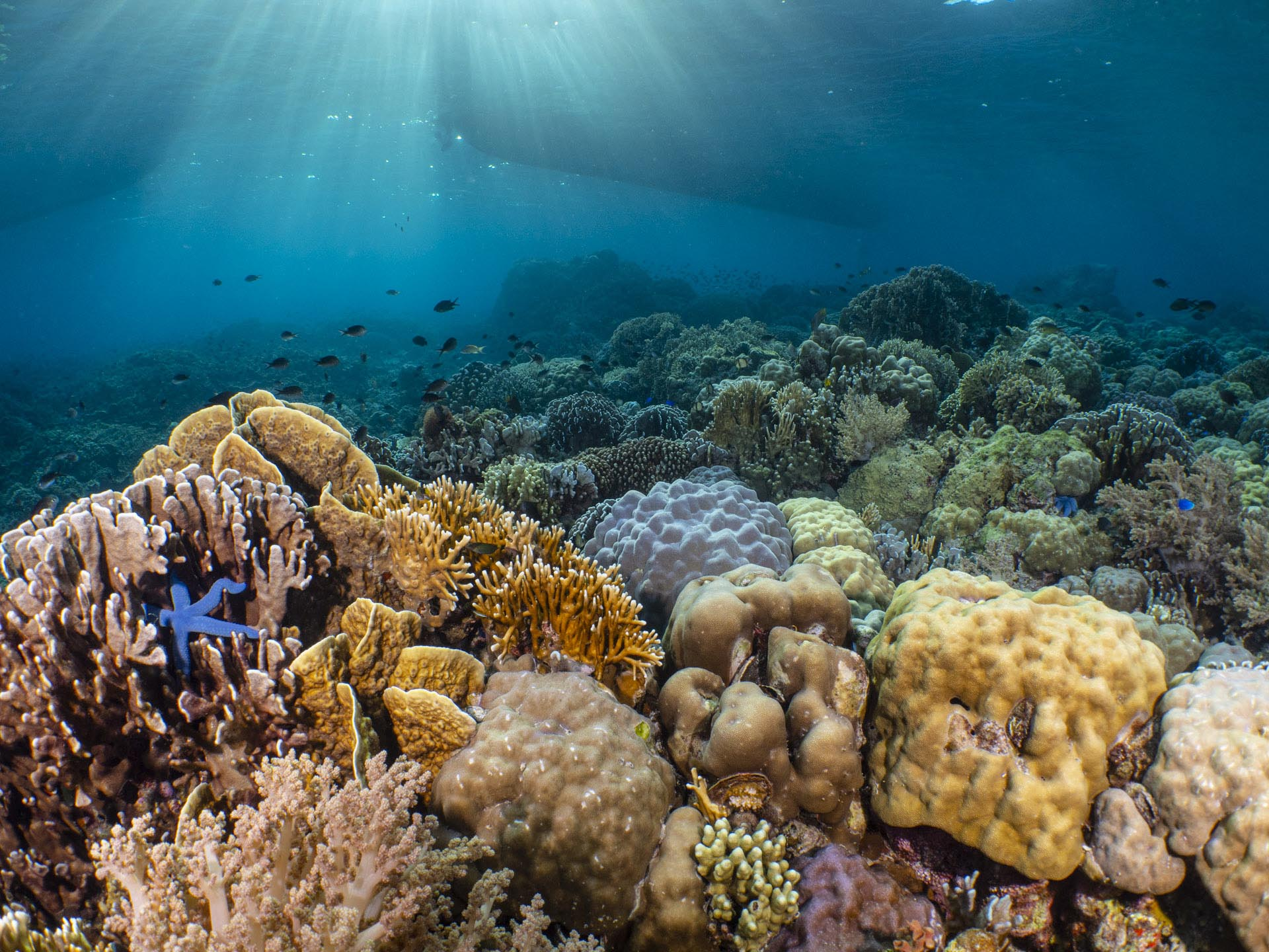 beautiful coral reef with sun beams