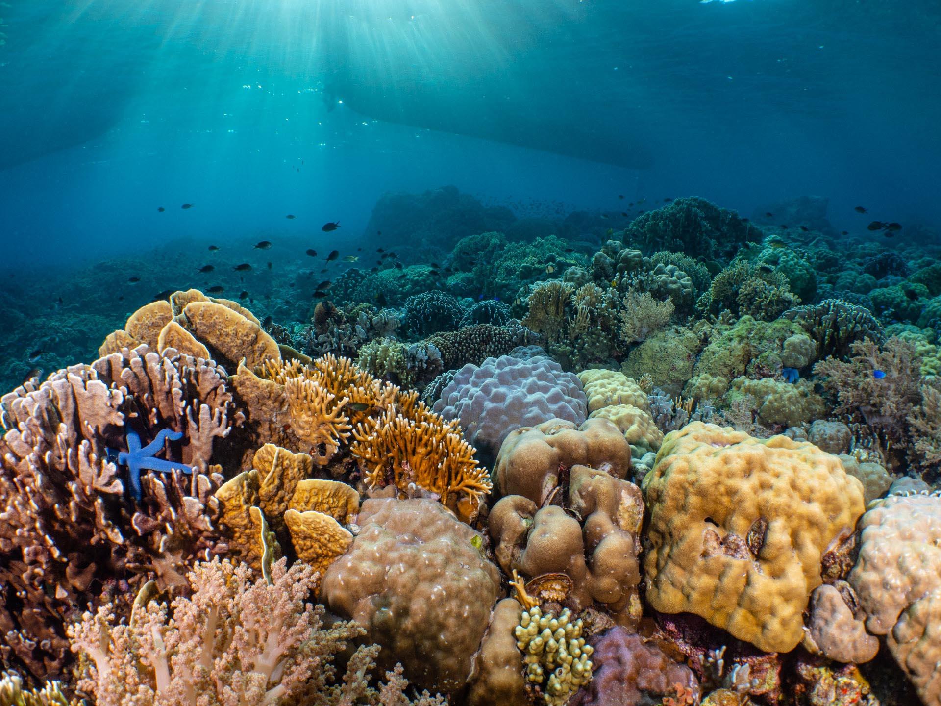 Coral Reef Scene with beautiful light in pescador island