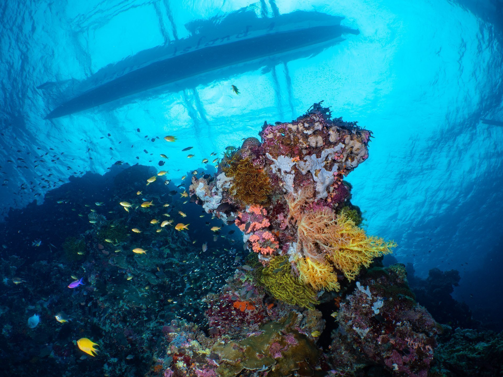 Soft coral with Philippine boat above