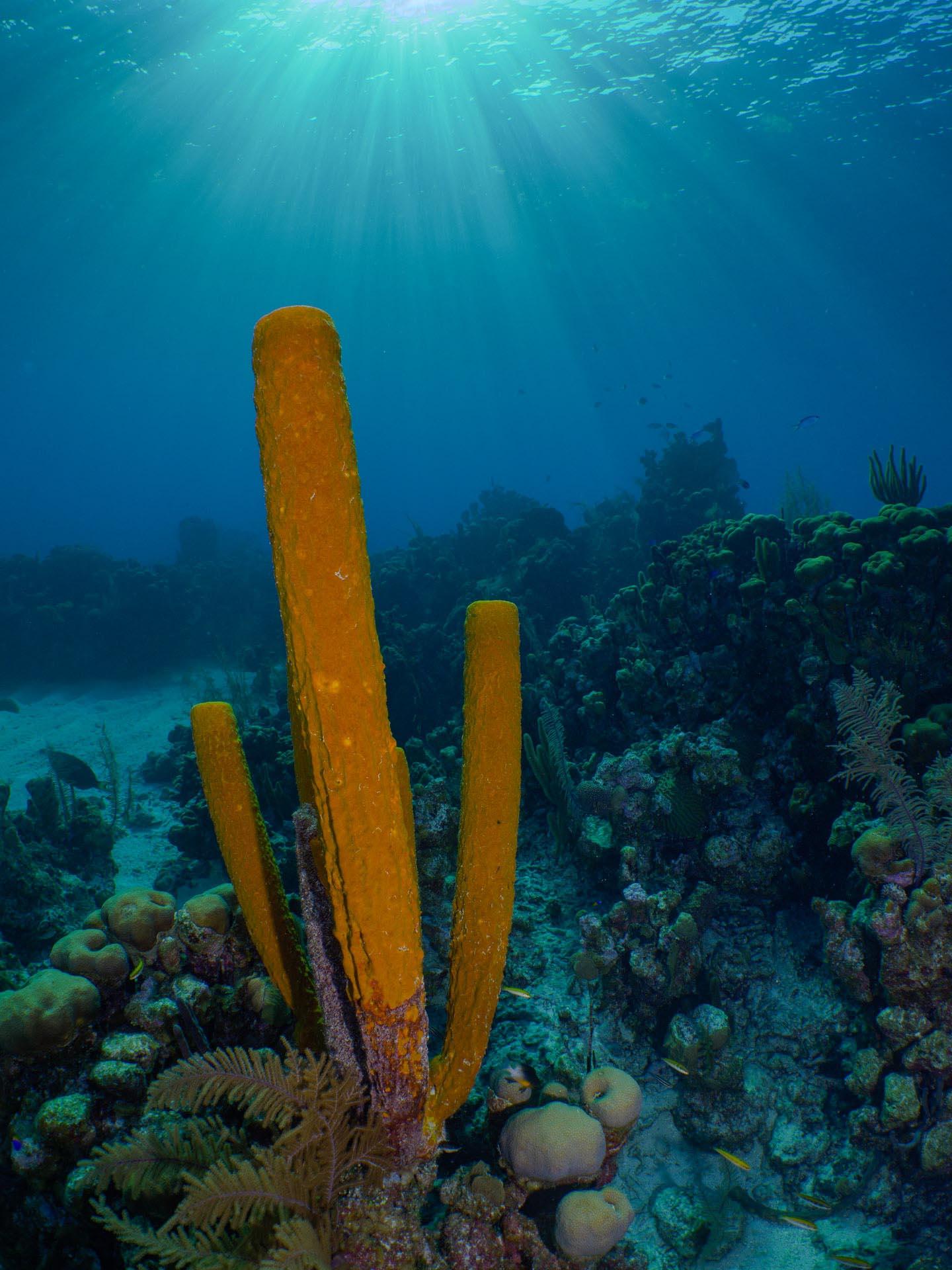 Orange sea sponge in coral reef