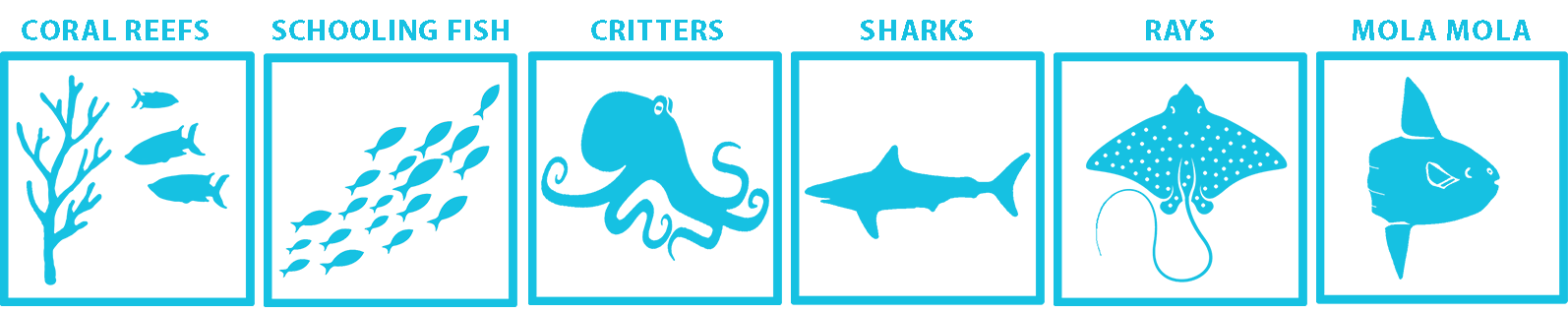 Alor Marine life guide
