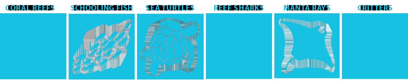 Komodo marine life guide