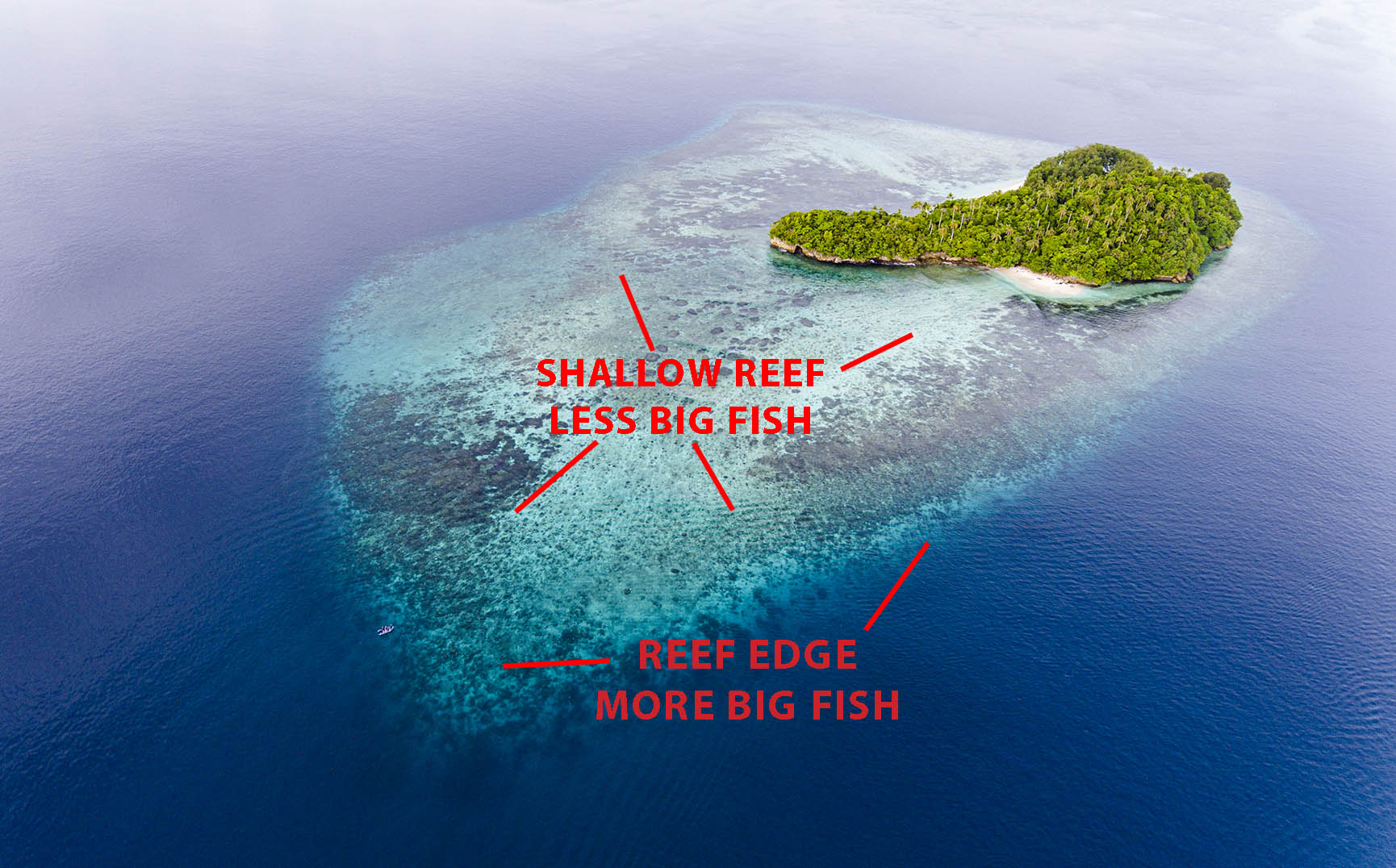 Diagram of where to find big fish on a reef