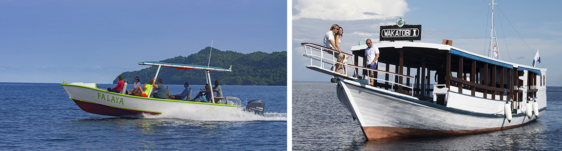 Misool and wakatobi boats