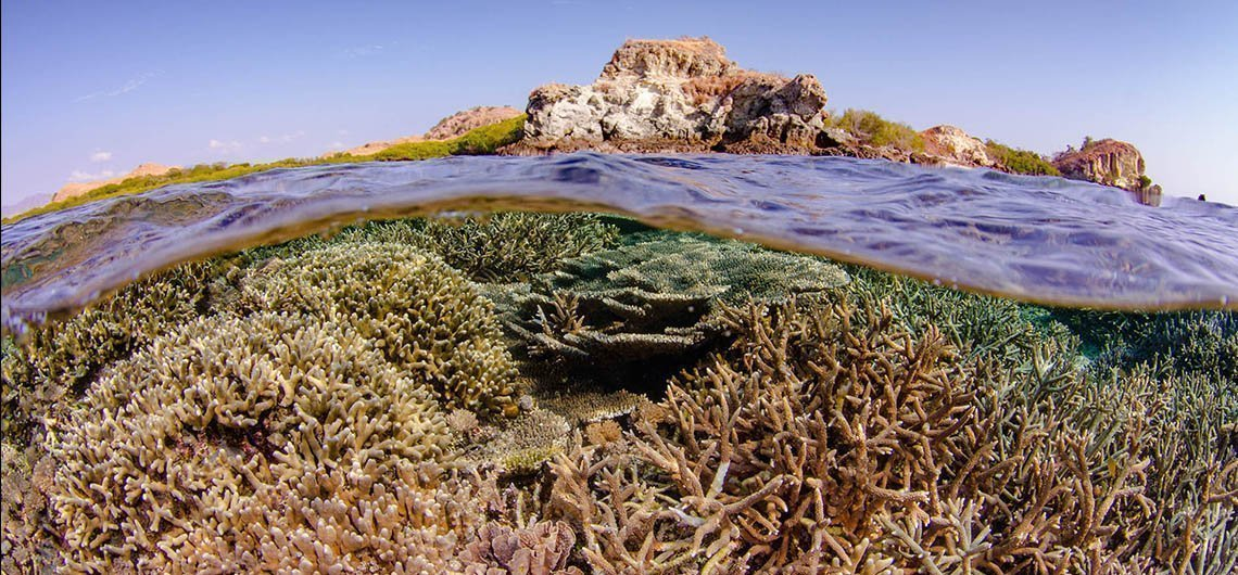 coral reef below the surface with island above